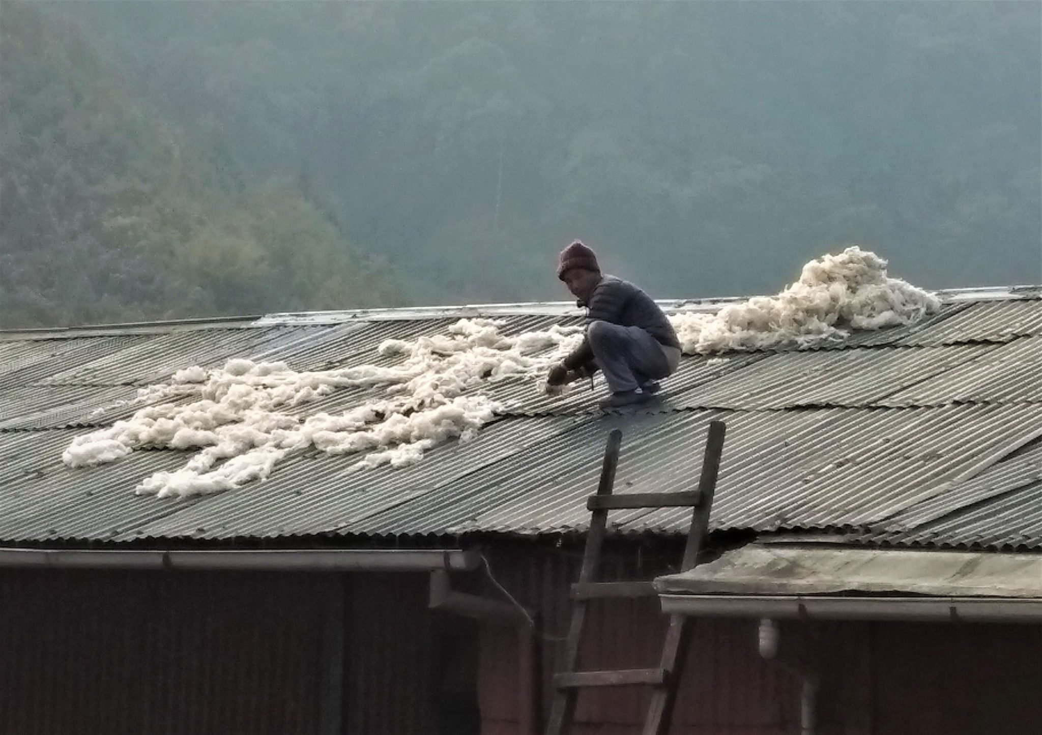 Drying the wool